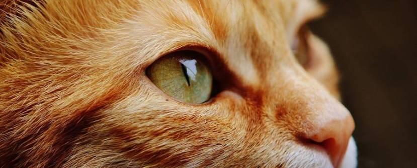 Mi gato, un maestro de la espiritualidad